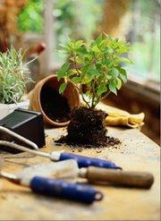 Карбонат кальция для растений